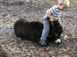Toddler Training Donkey