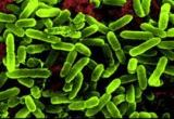 Probiotics 4 Health