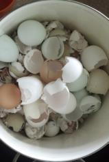 Calcium in Eggshells